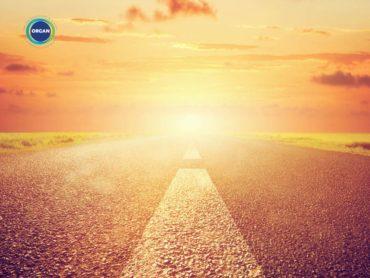 dim light - organ donation journey